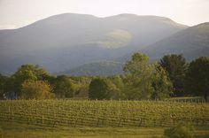 Veritas Vineyard, Afton, Virginia, near Charlottesville.