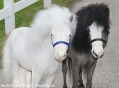 Gentle Carousel Miniature Therapy Horses Gentle Carousel - Adorable miniature horses provide those in need with love and care