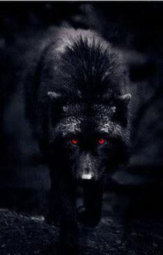 Black Wolf, Red eyes. Lobo Negro, Ojos rojos.
