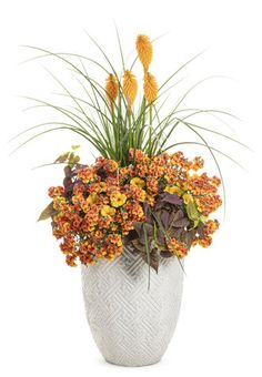 Proven Winners - Pyromania™ 'Orange Blaze' - Red Hot Poker - Kniphofia hybrid orange bright orange plant details, information and resources. Lavender Flowers, Orange Flowers, Red Sweet Potato, Orange Plant, Pineapple Sage, Potato Vines, Easy Care Plants, Garden Insects, Proven Winners