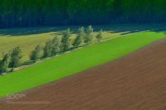 Meadows and Fields by jnovak