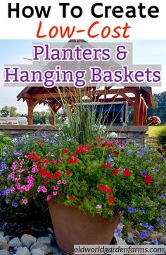 How to Create Low-Cost, Gorgeous Planters and Hanging Baskets. Plants For Hanging Baskets, Rock Garden Landscaping, Plants, Herb Garden Design, Flower Garden Plants, Sedum Plant, Flowers Perennials, Planting Hydrangeas, Planters