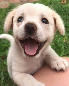Neuer Welpe - - Monica Lenihan Best Picture For Cutest Baby Animals videos For Your Ta Cute Dogs And Puppies, Baby Dogs, Doggies, Puppies Puppies, Cute Fluffy Dogs, Cute Animals Puppies, Adorable Dogs, Cute Little Animals, Cute Funny Animals