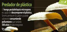 El descubrimiento de este hongo será una alternativa para la desintegración de plásticos en todo el mundo, inclusive en vertederos de basura. El hongo puede ser la clave para eliminar toneladas de plástico en la tierra ya que puede vivir sin oxígeno y desintegrar el poliuretano en cualquier superficie.