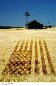 """~ """"Amber Waves of Grain"""" ~ God Bless America! ~ I Love This Country! ~ Happy of July! I Love America, God Bless America, America America, Awesome America, Thats The Way, That Way, Country Life, Country Girls, Country Living"""