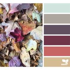 design seeds   search   for all who ♥ color ❤ liked on Polyvore featuring colors