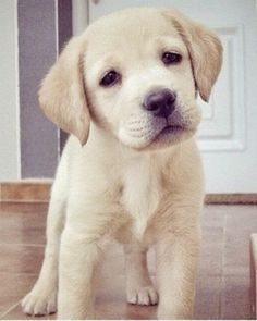 10 adorable puppy photos to brighten up your day
