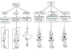 planos del estudio de los huesos - Buscar con Google