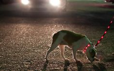 light up dog collars/leashes