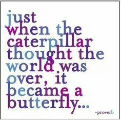 Just when the caterpillar thought the world was over, it became a butterfly... I love this!