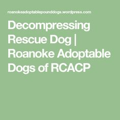 Decompressing Rescue Dog | Roanoke Adoptable Dogs of RCACP