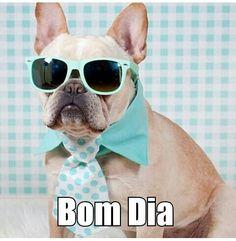 O cachorro tá na moda!!!