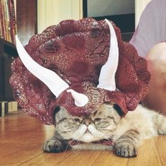 23 of the Cutest Cat Halloween Costumes | http://mycatcentral.com/cutest-cat-halloween-costumes/