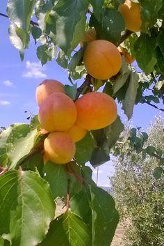 Dettaglio:i nostri frutti