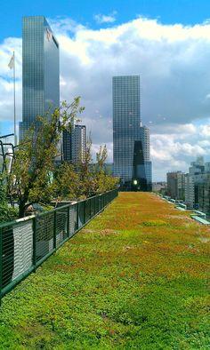 Rotterdam green roof