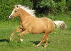 Arabian Horses - Animals Arab horse