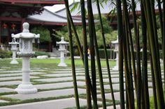 A Bamboo Tree infront of the Temple Courtyard at the Fo Guang Shan Buddhist Temple, Auckland.