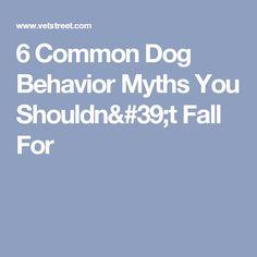 6 Common Dog Behavior Myths You Shouldn't Fall For