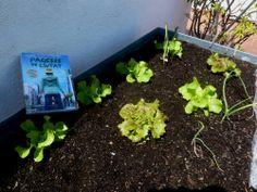 Pep (Sant Pol) #33 Plants, Plant, Planets
