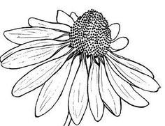Line Drawings of Flowers | Simple insect and flower line drawings