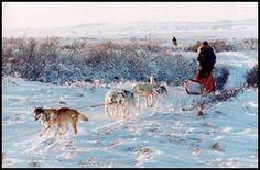 Dog mushing in Alaska / Canada- best around January-March