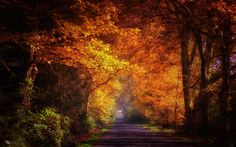 cool trees road autumn sunshine wallpaper Check more at http://www.finewallpapers.eu/pin/15606/