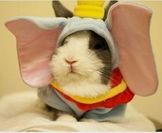 Dumbo the flying Guinea Pig. I want this costume for my guinea pigs! Guinea Pig Costumes, Guinea Pig Clothes, Pet Halloween Costumes, Pet Costumes, Animal Costumes, Funny Halloween, Halloween Ideas, Costume Ideas, Happy Halloween