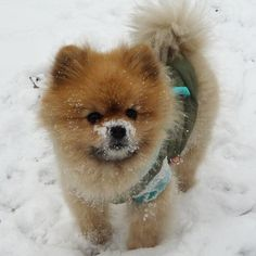 Despite my fondness for large dogs, I can't resist puppies in the snow.