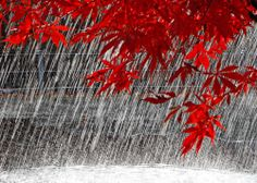 I love the rain more than just about anything at all. The way it washes clean, the way it cools everything off. Its Raining Its Pouring, I Love Rain, Rain Photo, Rain Days, Autumn Rain, Walking In The Rain, Rain Umbrella, Dew Drops, When It Rains