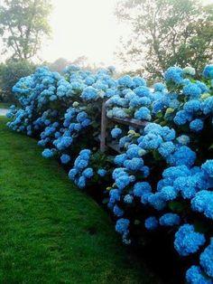 My blue heaven.