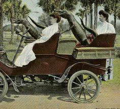 Bizarre Alligators Driving Automobile Vintage Postcard.
