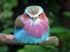 Color / Rainforest