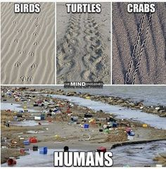 These images just sums up that we as human beings need to get our act together we are the ones destroying planet earth. Save Planet Earth, Save Our Earth, Our Planet, Save The Planet, Plastic In The Sea, Foto Fantasy, Mind Unleashed, Save Our Oceans, 4 Oceans