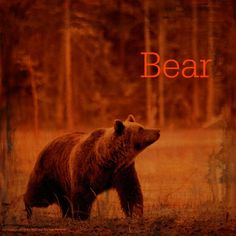 November 10, 2015 Totem Card of the Day - Bear :http://bearmedicinewalker.com/2015/11/10/november-10-2015-totem-card-of-the-day-bear/