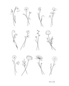 ✨Birth Flower Flash✨ January - Snowdrop February - Violet March - Daffodil April - Sweetpea May - Lilly of the Valley June - Rose July -…