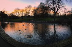 Pond Sheffield