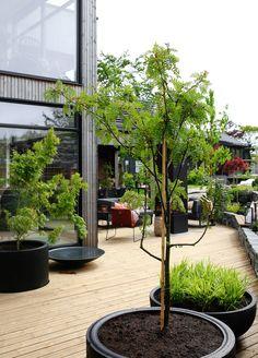 TV GARDEN DESIGN – TV2 2021 Outdoor Balcony, Outdoor Planters, Balcony Garden, Outdoor Rooms, Outdoor Gardens, Back Gardens, Small Gardens, Amazing Gardens, Beautiful Gardens