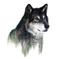 Wolf, nature