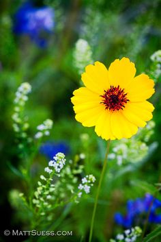 Photograph - Wildflowers In The Hill Country Of Central Texas by Matt Suess , Beautiful Flowers Garden, Pretty Flowers, Wild Flowers, Blossom Garden, Blossom Flower, Front Yard Planters, Bokeh Photography, All Nature, Flower Boxes