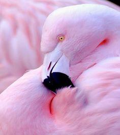 Pink Flamingo Some pretty birds Pretty Birds, Love Birds, Beautiful Birds, Animals Beautiful, Pretty In Pink, Cute Animals, Pink Animals, Pink Bird, Tier Fotos