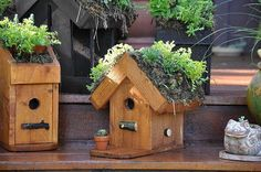 Succulent roofs on birdhouses