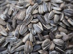 Sunflower Seeds protect against memory stealing Alzheimer's disease