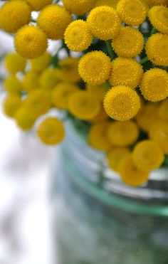 220 best colorsnny yellow images on pinterest yellow flowers and everything floral mightylinksfo