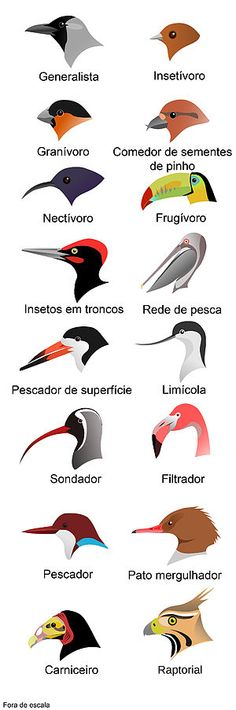 Science: Zoology- Birds- beak shapes for different types of feeding. Animal Adaptations, Teaching Science, Life Science, Preschool Science, Mystery Science, Teaching Ideas, Teaching Methods, Science Classroom, Science Art