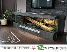 paludarium unter einem treppenaufgang oder unter. Black Bedroom Furniture Sets. Home Design Ideas