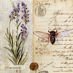 ≗ The Bee's Reverie ≗ #lavender