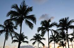 #Martinique Les Trois-Îlets © Gil Giuglio