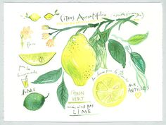 Lime original watercolor painting Fruit illustration Botanical poster Food art Kitchen Home decor Lemon Citrus Yellow Green. $65.00, via Etsy.