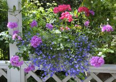 Ihanat kesäkukat: näin onnistuu kylvö ja hoito | Meillä kotona