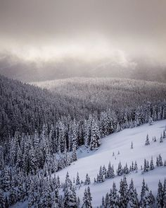 Wintry wilderness for as far as my eyes could see, a scene straight from my dreams